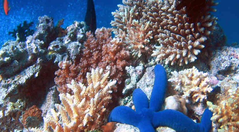 Riesiges zweites Koral...