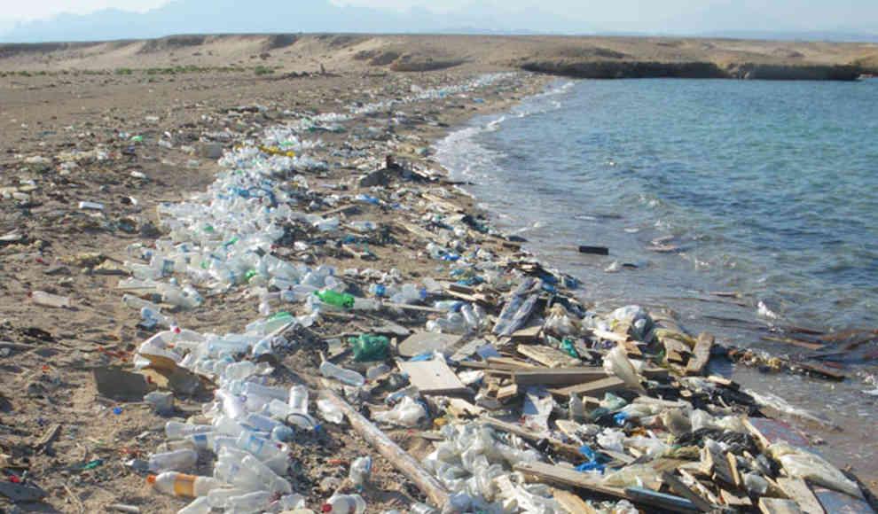 Bakterien Plastik