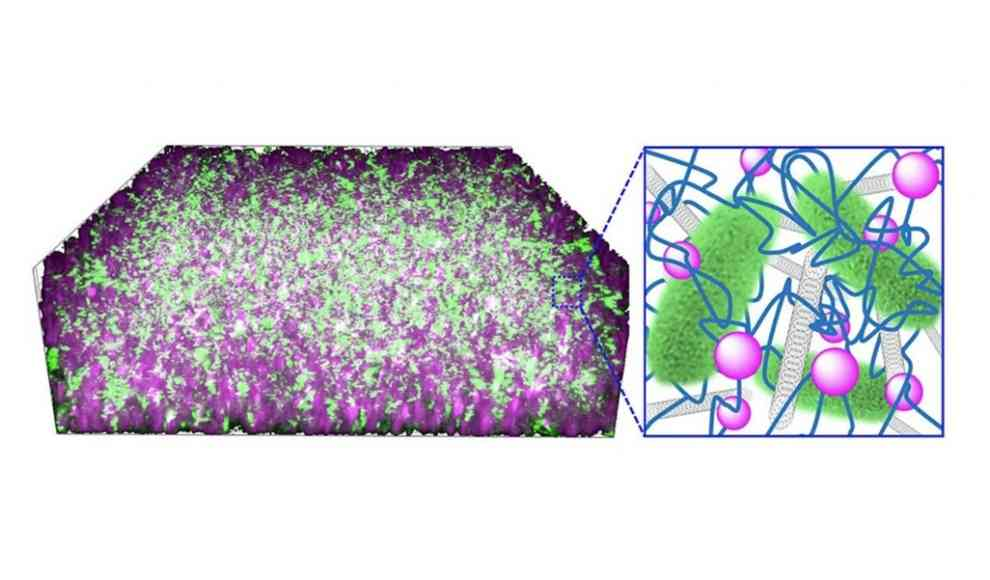 Bakterien erzeugen Strom in Bio-Batterie