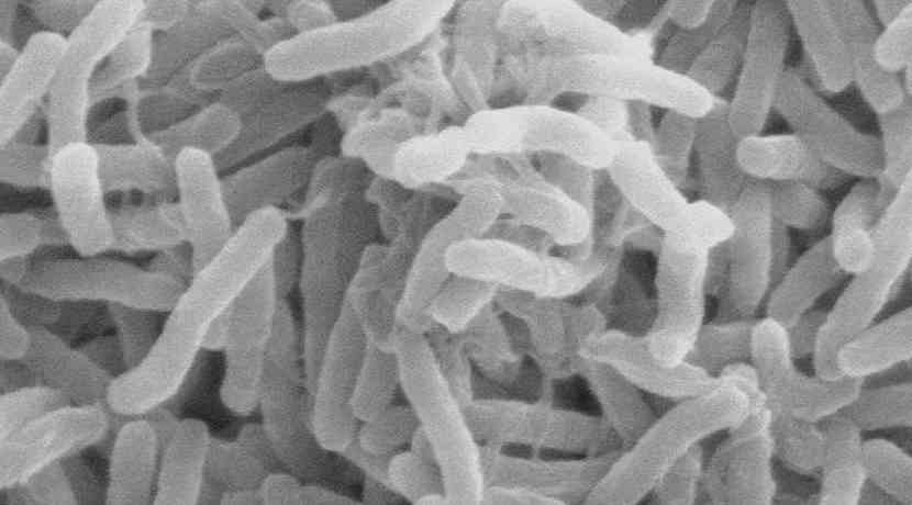 Akne Bakterien
