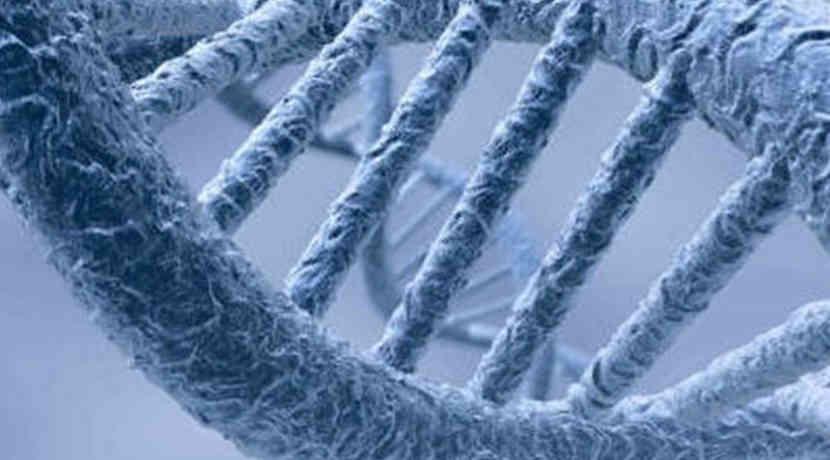 Menschliche Gene