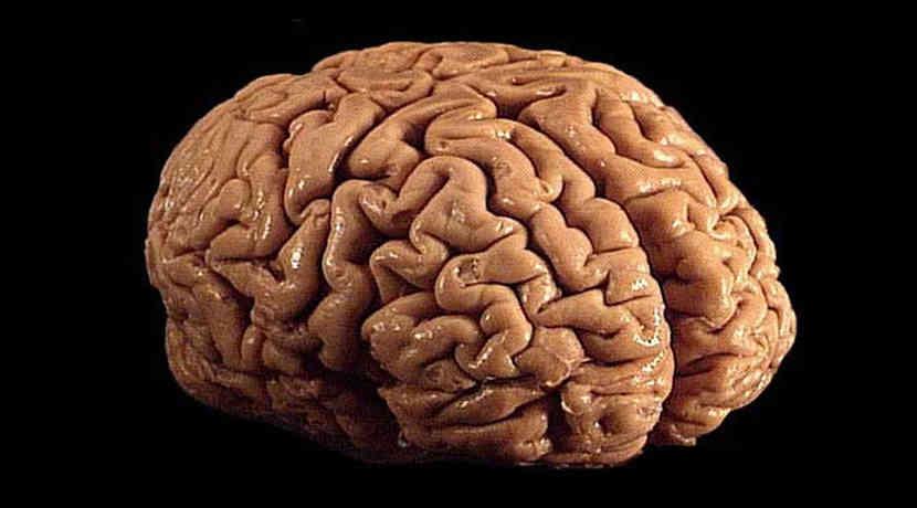 Wie Grippe langfristig das Gehirn verändert