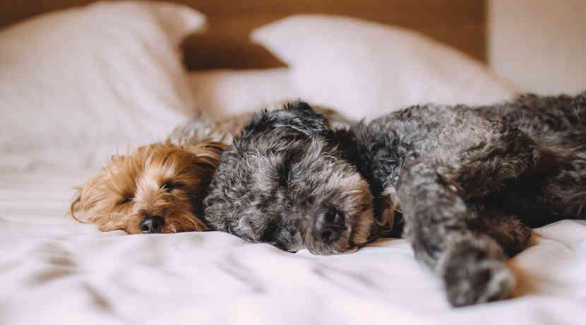 frauen und hunde