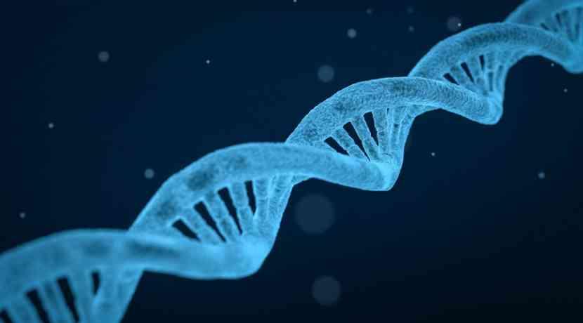 CRISPRoff-deaktiviert-einzelne-Gene-dauerhaft