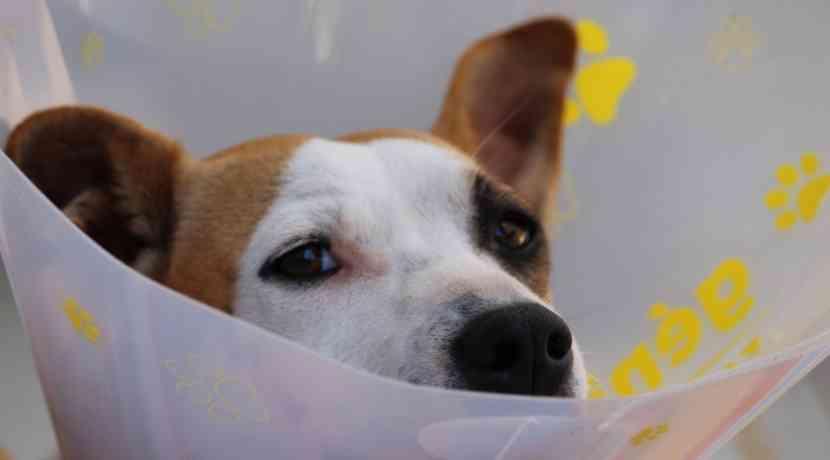 Tierkrankenversicherung-bei-Hunden-in-Deutschland-selten