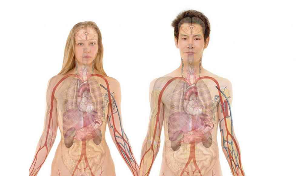 Körper Quiz