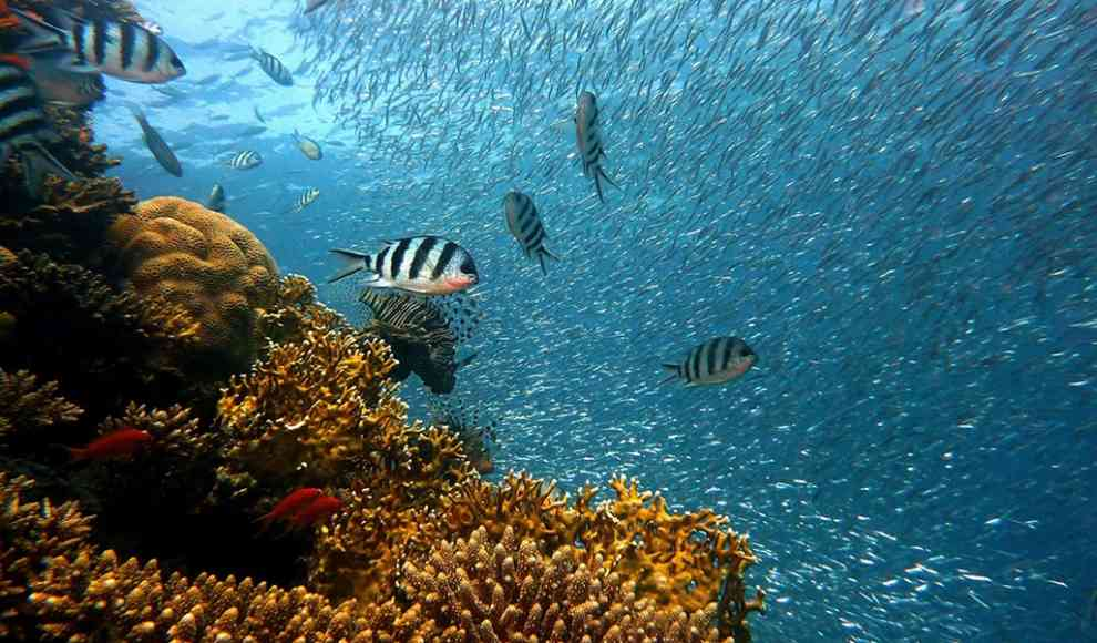 Great Barrier Reef Quiz