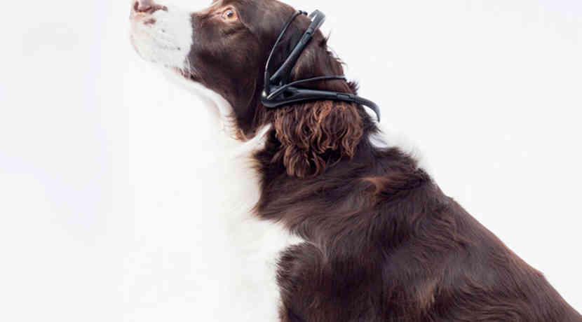 halsband bersetzt gedanken der hunde in menschliche sprache. Black Bedroom Furniture Sets. Home Design Ideas