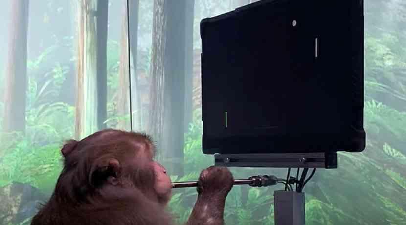 Affe-spielt-Pong-per-Hirnimplantat