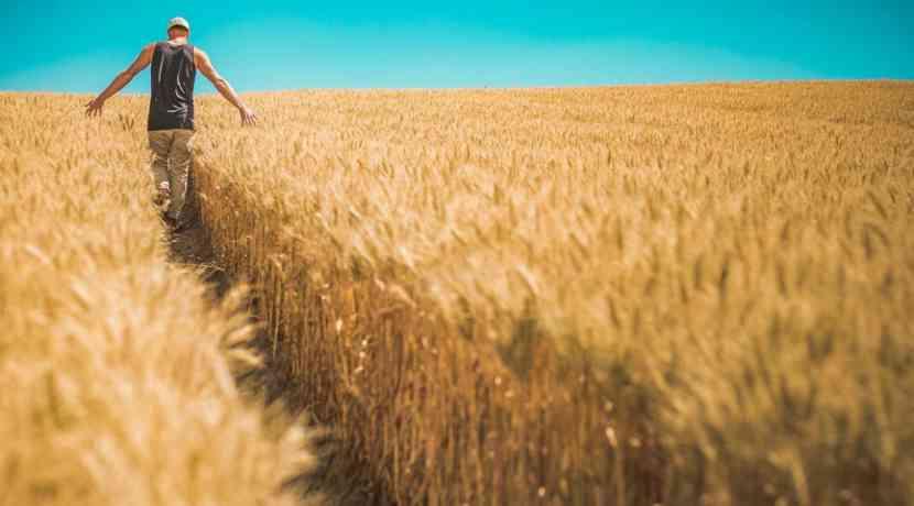 Weizen Ersetzen